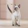 Katzen sind schlauer als gedacht