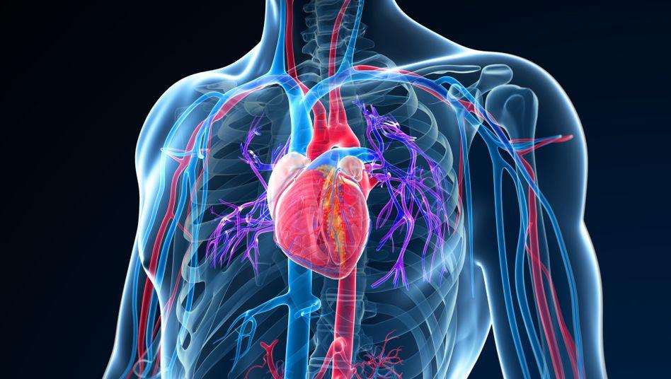 Covid-19 befällt Herzzellen