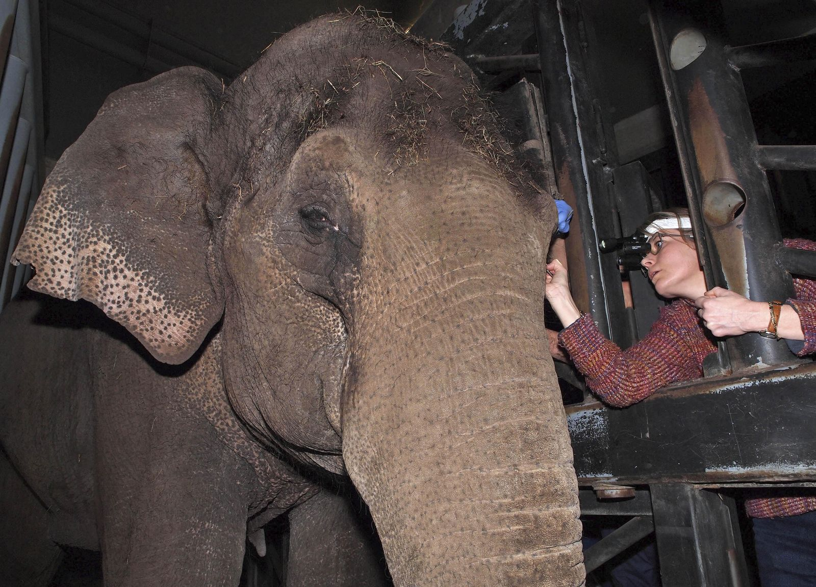 Niederlande/ Kontaktlinsen für Elefant