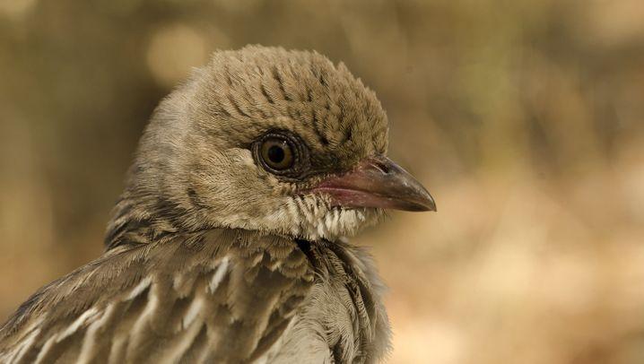Nahrungssuche: Mensch-Vogel-Kooperation