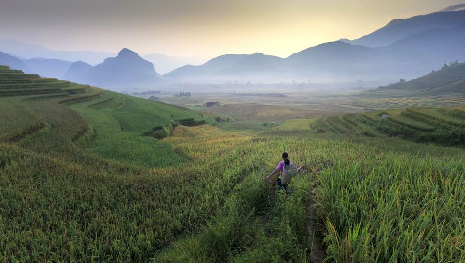 Rice cultivation in Vietnam: Within three decades, we will have to produce twice as much food as we do today.