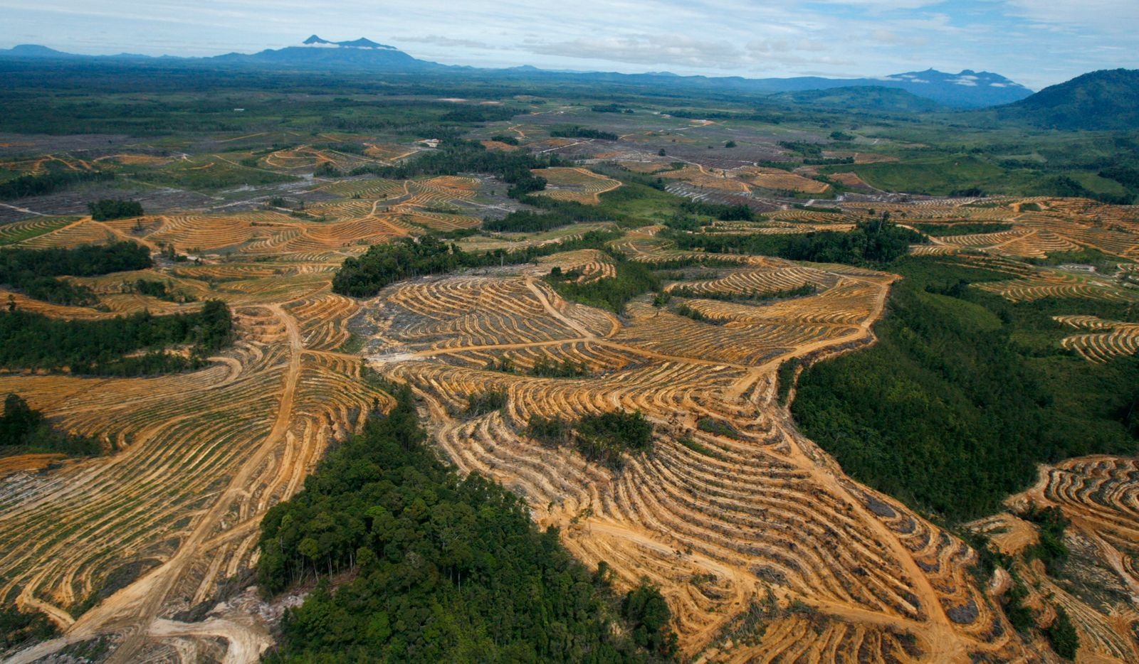 An aerial view is seen of a cleared forest area under development for palm oil plantations in Kapuas Hulu district of Indonesia's West Kalimantan province