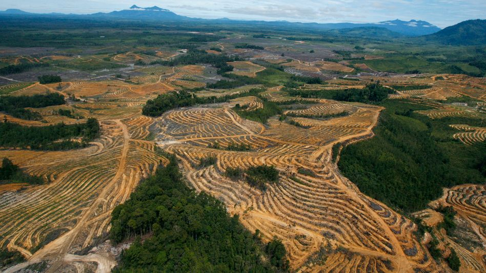 Palmölplantage (Symbolbild)