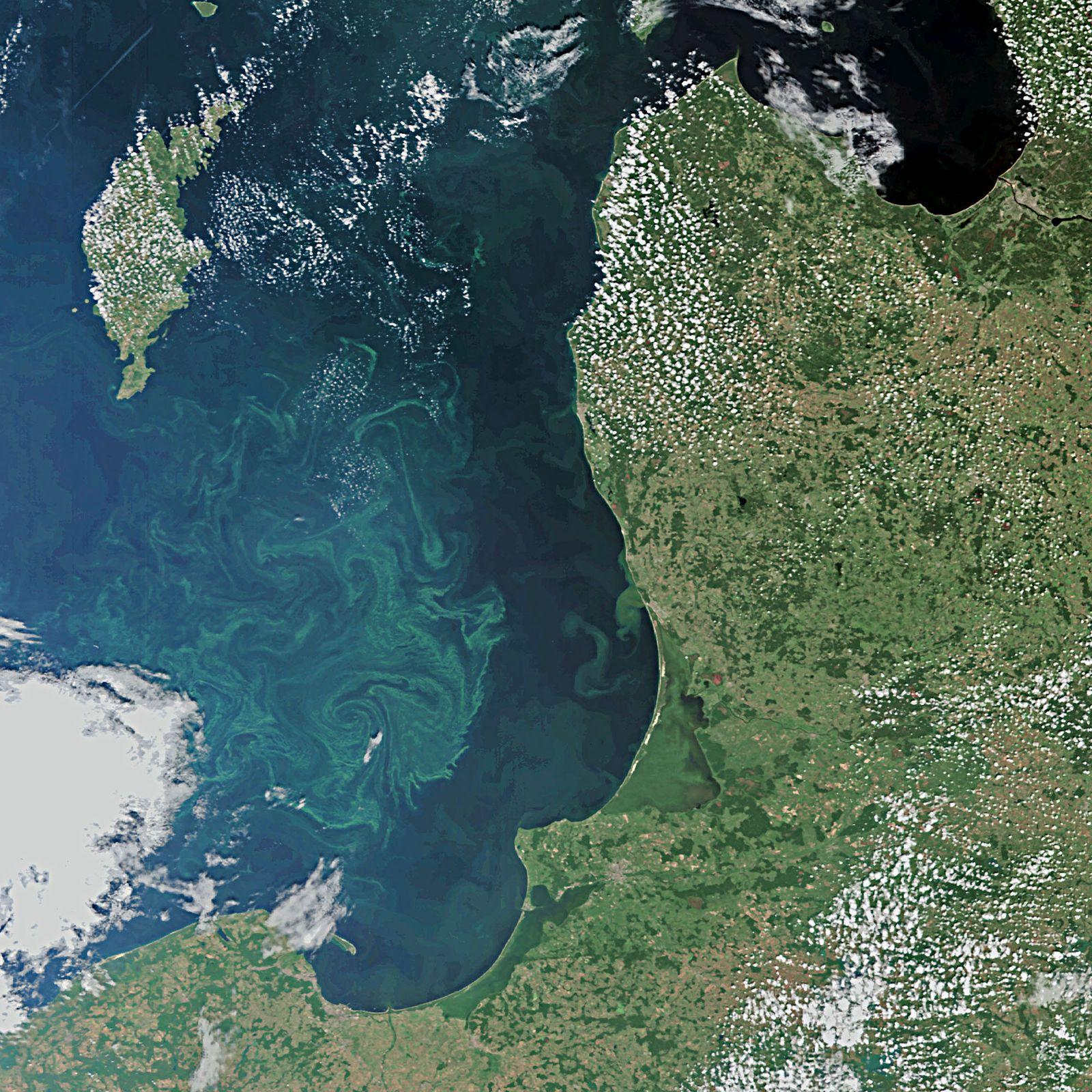 Blaualgen / Ostsee