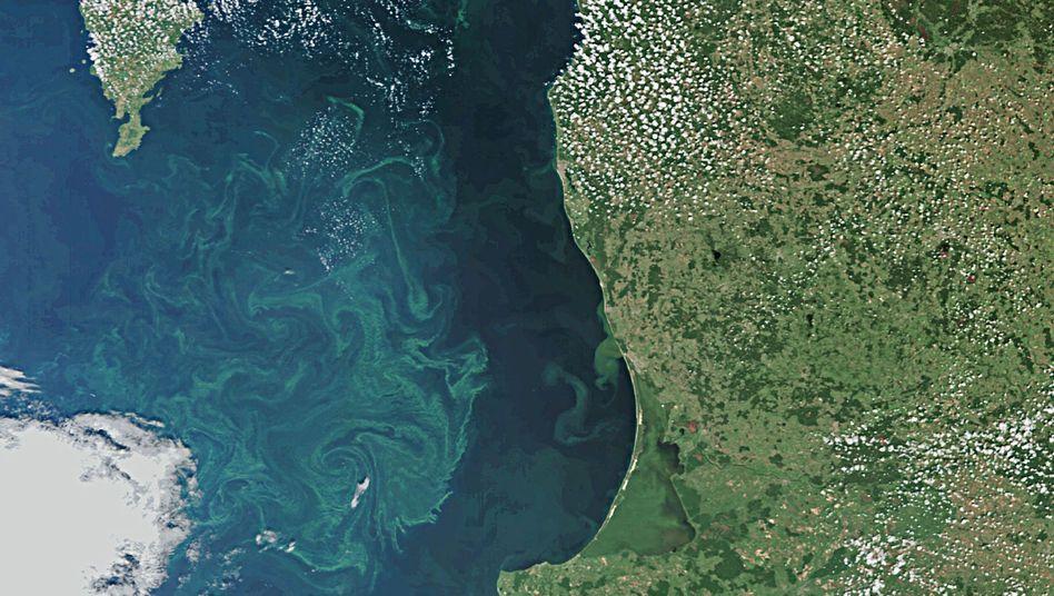 Algenblüte auf der Ostsee vor Danziger Becken, Kaliningrad und Litauen
