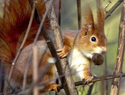 A squirrel.