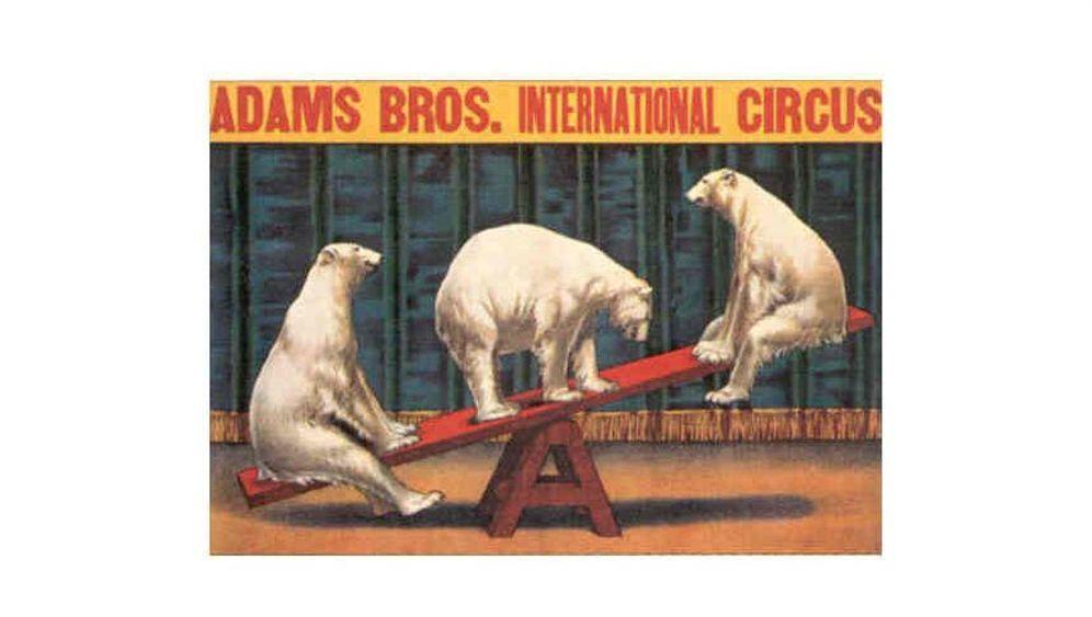 Zirkus: Millionär aus der Manege