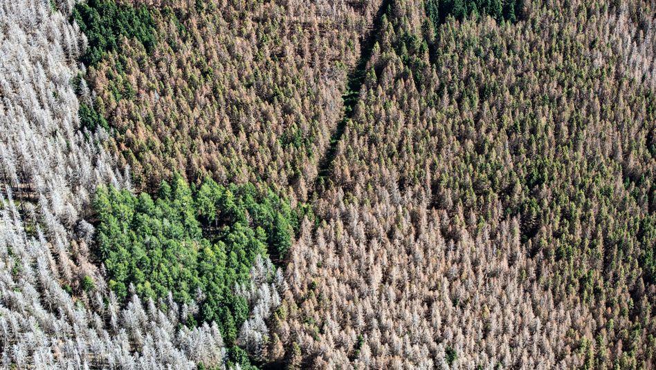 Vielerorts, wie hier im Harz, sind die deutschen Wälder geschädigt