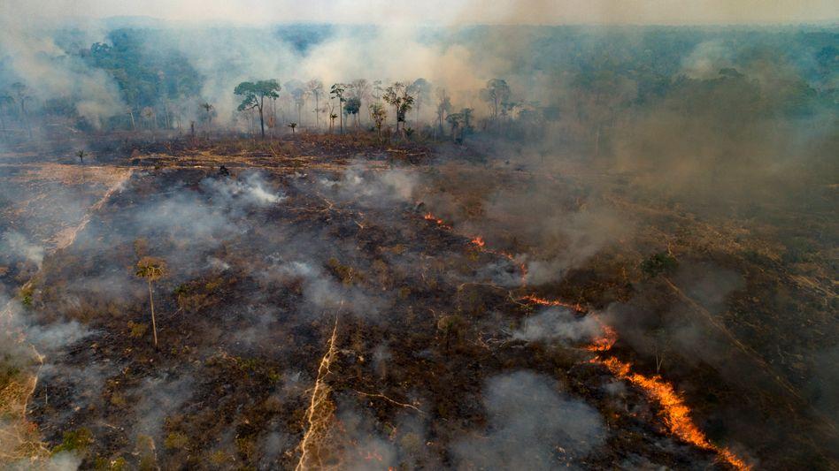 Brand im Amazonasgebiet (hier im brasilianischen Bundesstaat Pará)