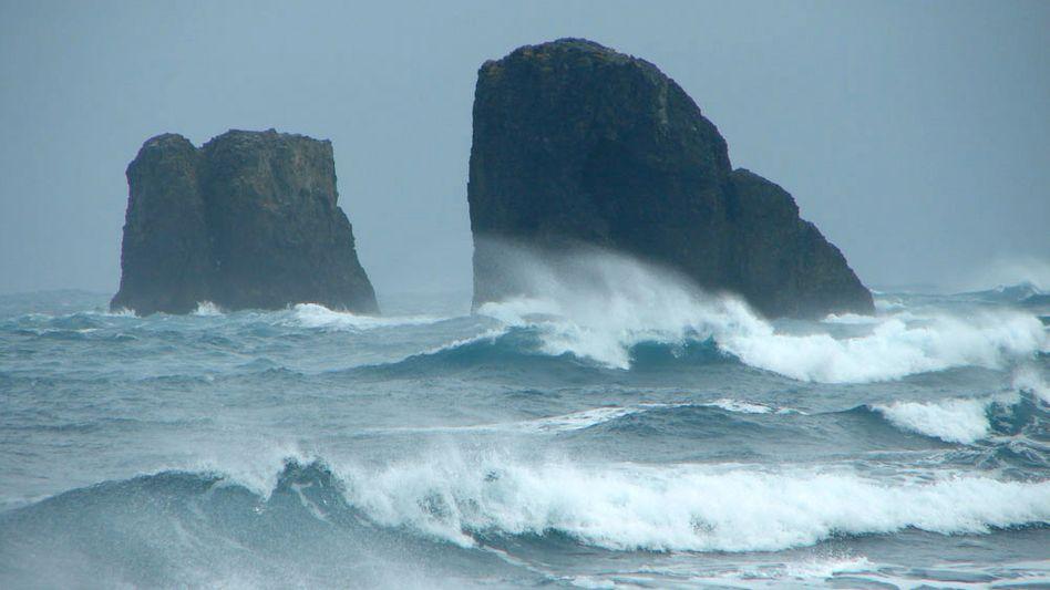 King George Island in der Antarktis: Kohlenstoffsenke in den südlichen Meeren