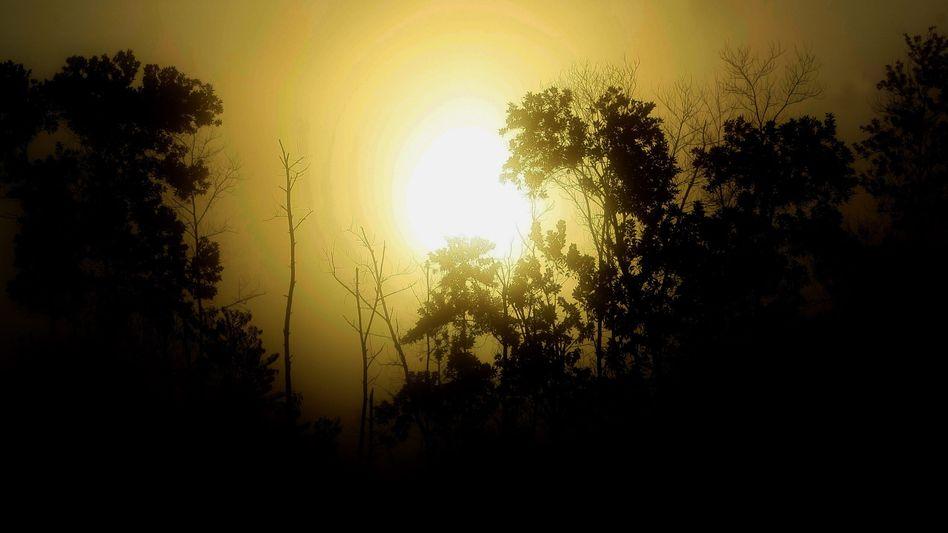 Tesso Nilo National Park, Indonesien: Moratorium zum Waldschutz verlängert