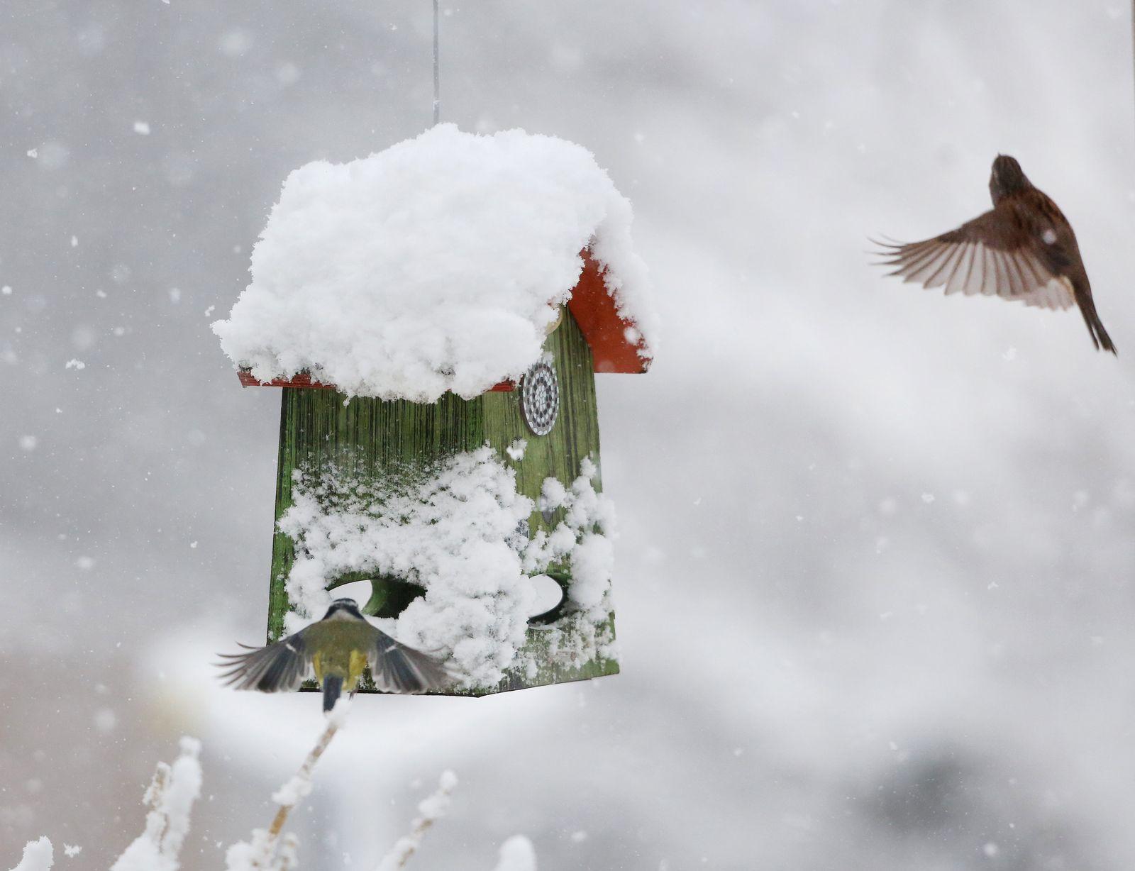 Wetter/ Deutschland/ Schnee
