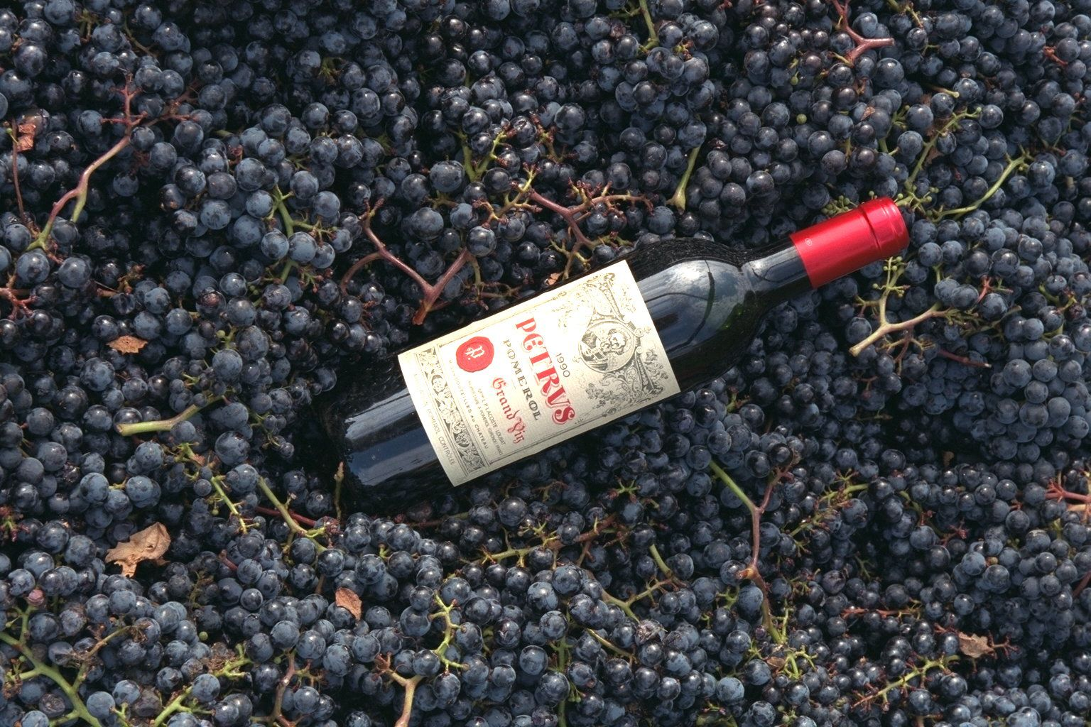 GRAPE PICKING AT CHATEAU PETRUS IN POMEROL