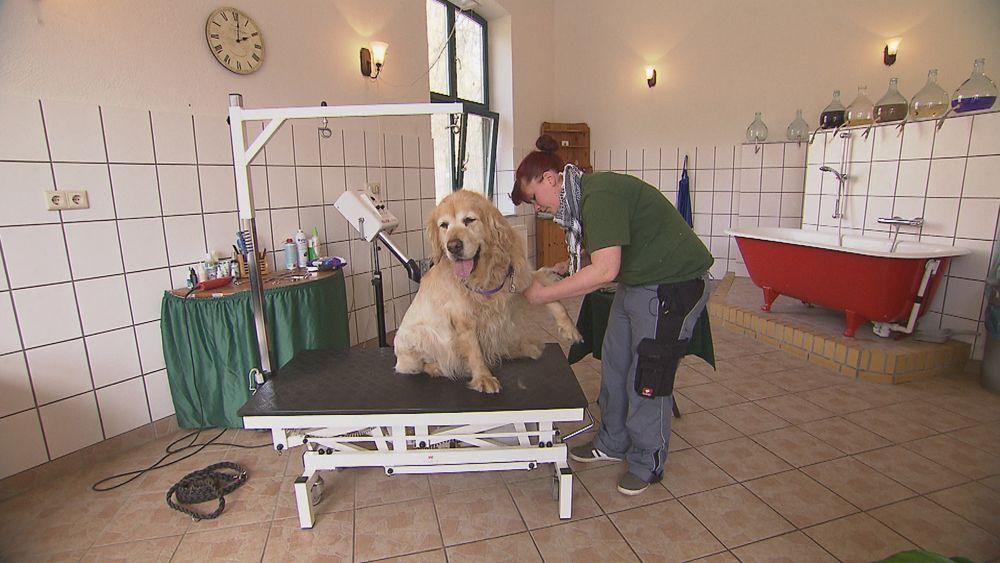EINMALIGE VERWENDUNG SPIEGEL TV Wissen Das Hundehotel