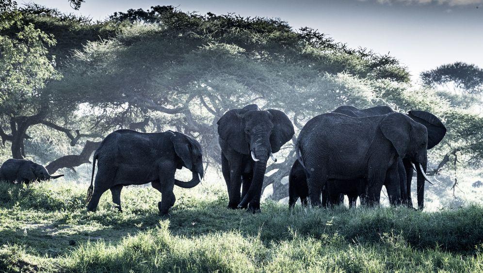 Tansania: Elefanten-Stelldichein