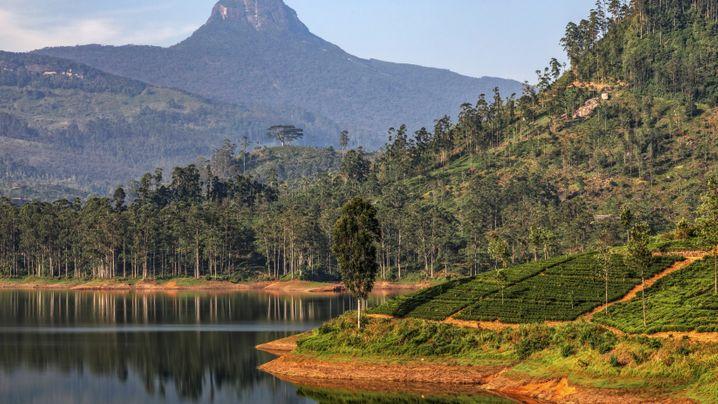 Adam's Peak in Sri Lanka: Bergtour mit Buddha