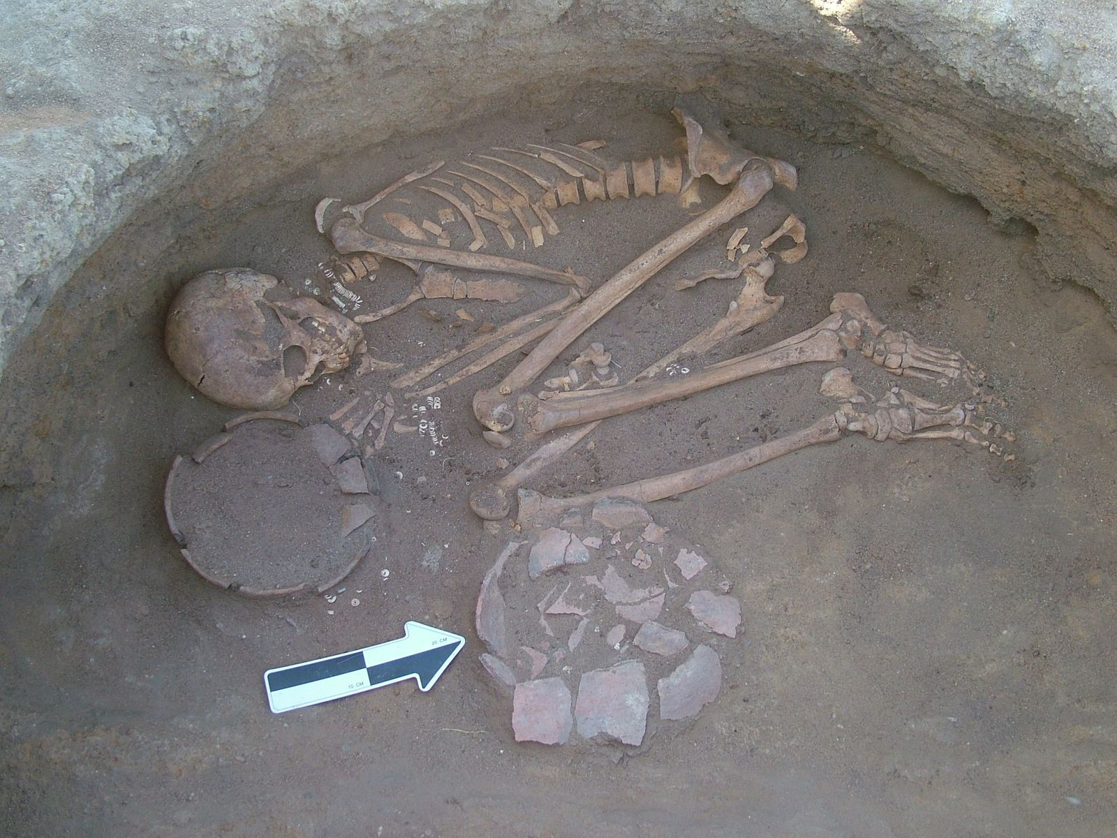 Vorfahren hatten detailliertes Pflanzenwissen