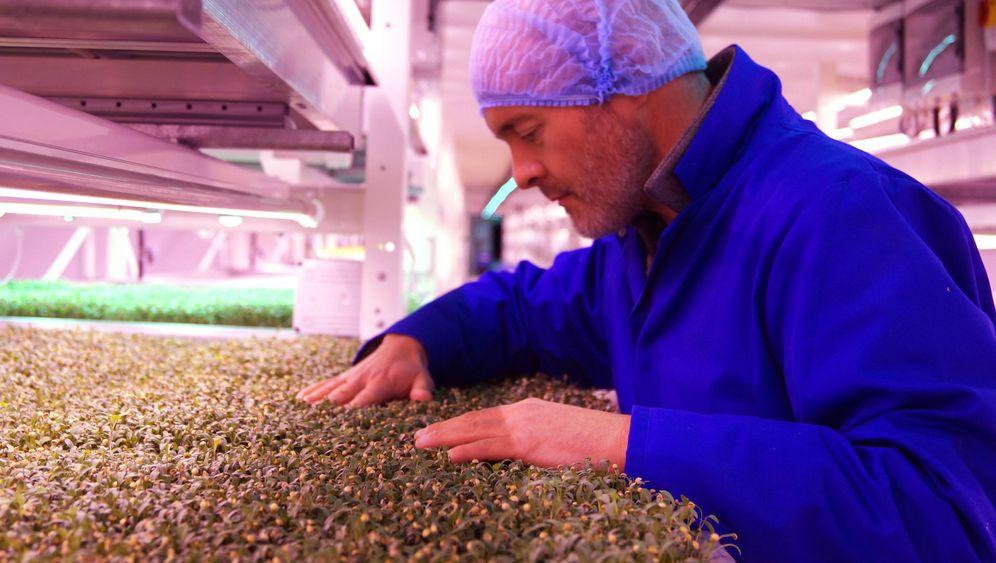 """""""Vertical Farming"""" in London: So sieht die Farm im Bunker aus"""