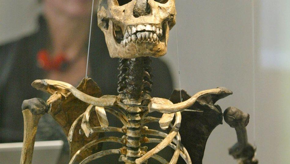 Homo-erectus-Skelett: Kleine Backenzähne deuten auf Nahrungserhitzung hin