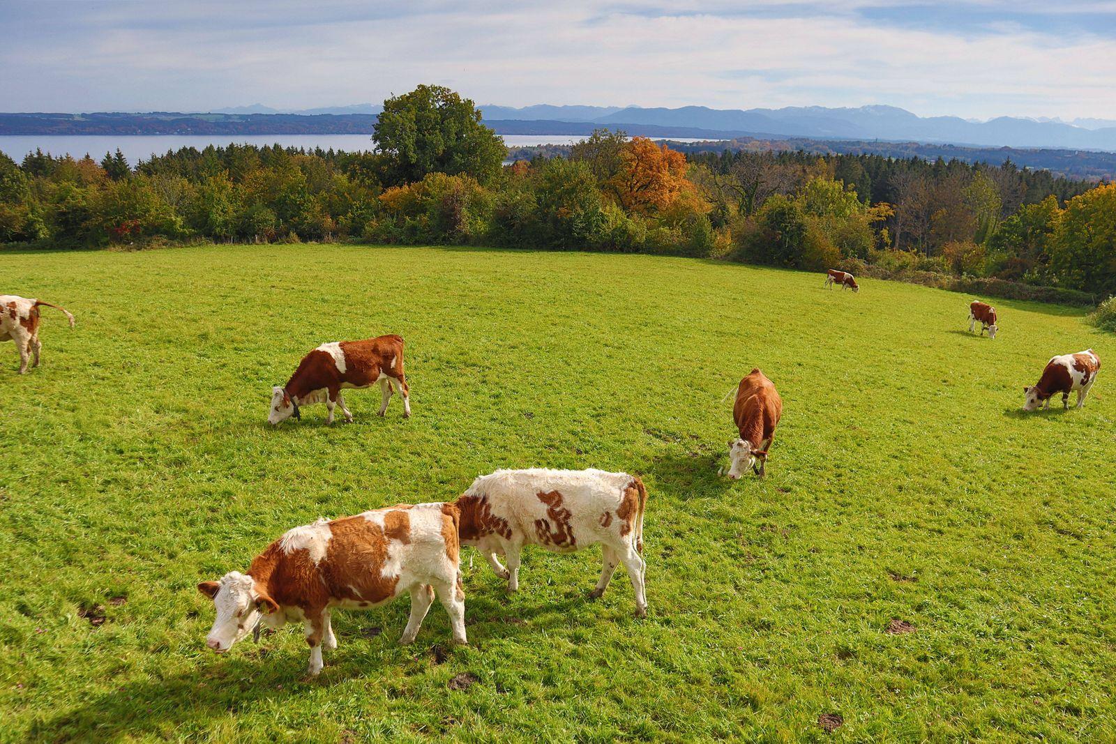 LK Starnberg, Deutschland Oktober 2020: Impressionen Herbst - 2020 Tutzing, Starnberger See, Fuenfseenland, Oberbayern,