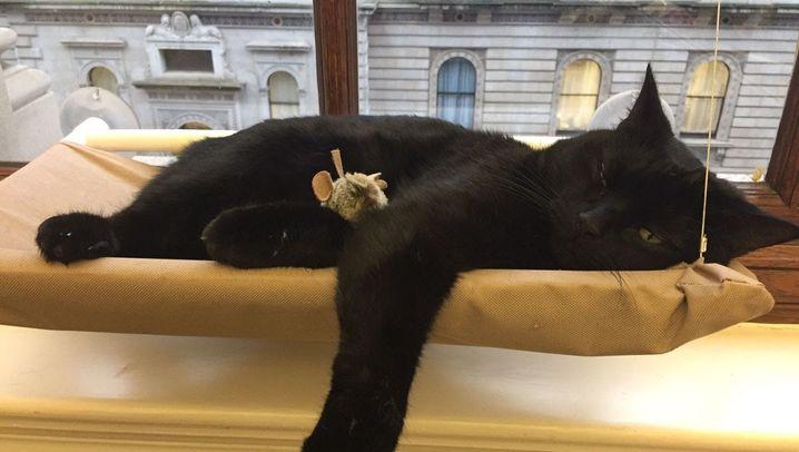 Tag der schwarzen Katze: Black is beautiful