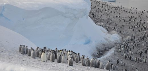 Satellit spürt Pinguine in der Antarktis auf