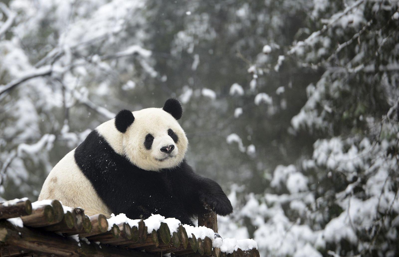 CHINA-ANIMALS/