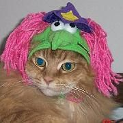 Katze mit Kopfbedeckung: Publikumsliebling bei Stuffonmycat.com