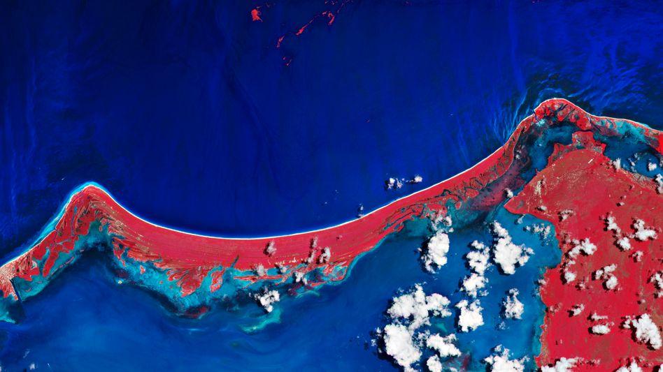 Falschfarbenbild des Meeres vor der mexikanischen Insel Holbox