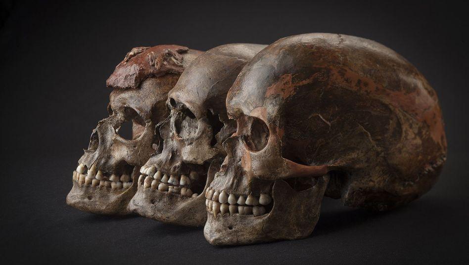 31.000 Jahre alte Schädel aus Tschechien