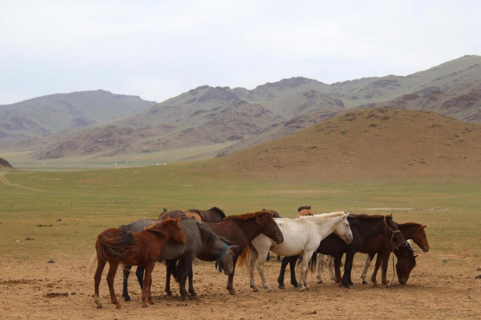 SPERRFRIST 2. JULI 21:00 UHR / Pferde