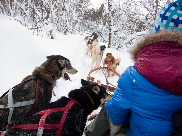 Gafsele: Hundeschlitten sind hier ein gutes Transportmittel