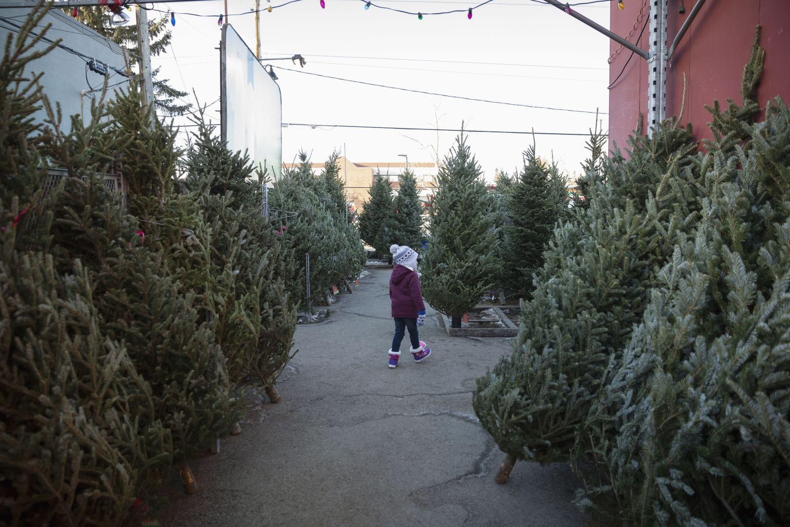 EINMALIGE VERWENDUNG Weihnachtsbaum/ Markt