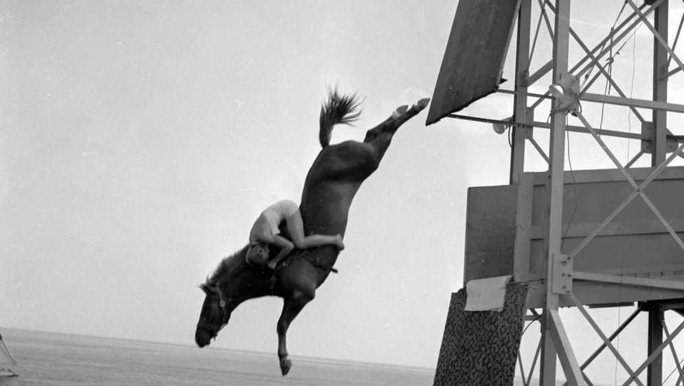"""Horse Diving: """"Wir sanken tiefer, tiefer, tiefer"""""""