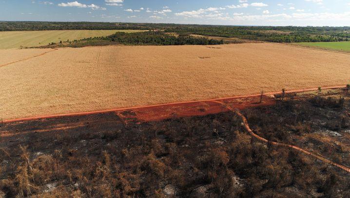 Sojaanbau in Paraguay: Entwaldung für deutsches Tierfutter