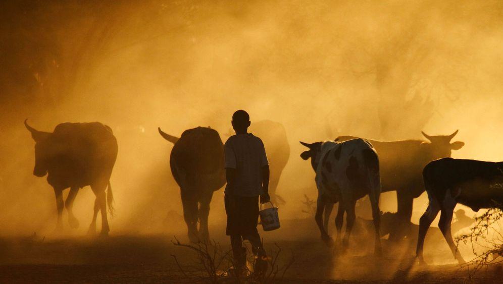 Rinderpest: Ende einer Seuche