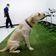 Diese Hunde erschnüffeln Coronainfektionen in zwei Sekunden