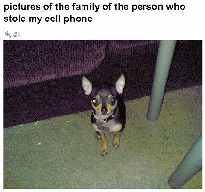 Der (angebliche?) Hund des Handy-Diebes: Tierischer Zeuge oder Werkzeug einer viralen Werbekampagne?