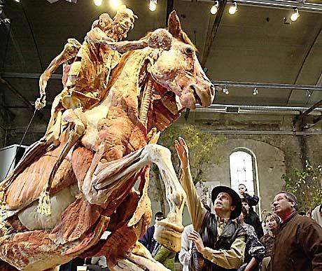"""""""Körperwelten""""-Ausstellung in Berlin, plastiniertes Pferd: Nicht mehr Leichen, sondern Sachen"""