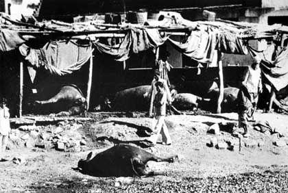 Chemie-Katastrophe in Bhopal: Tausende Menschen und Tiere kamen am 3. Dezember 1984 ums Leben