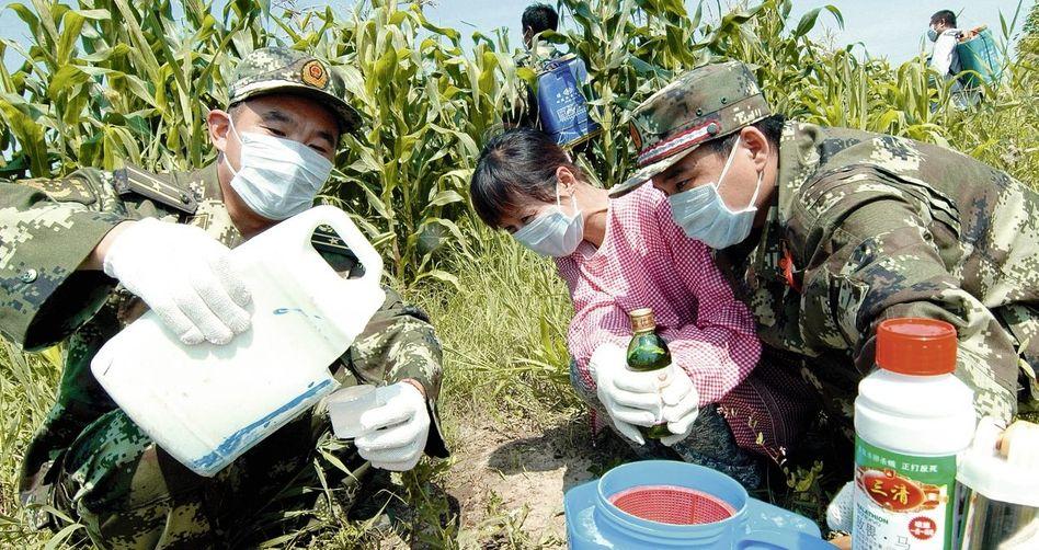 Armeeangehörige und Landarbeiter in Jinzhou bei der Abfüllung von Pestiziden: Gefärbte Erbsen und falsche Schweineohren