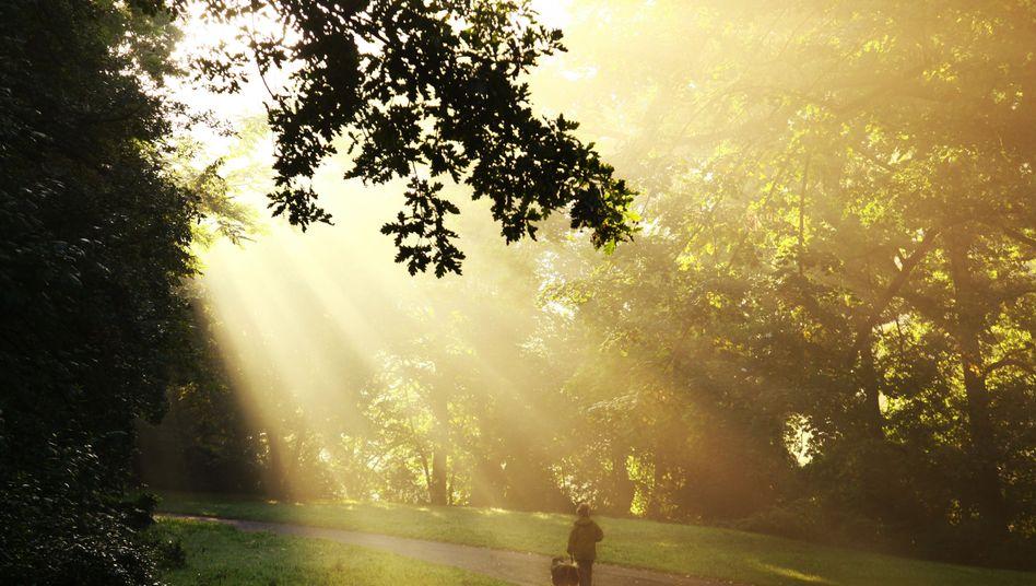 Spaziergang: Das beliebteste Mittel der Deutschen, Stress zu entgehen