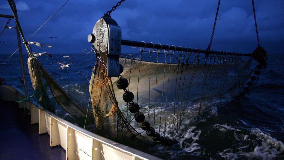 """Krabbenkutter mit hochgezogenem Grundschleppnetz: """"Katastrophale Effekte"""" der Bodenabtragung"""