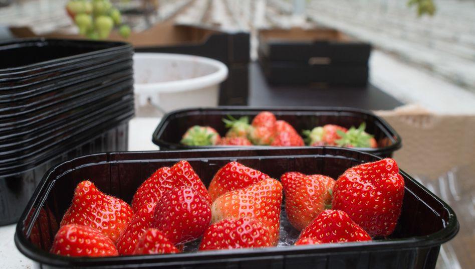 Erdbeeren in einer Schale (Symbolbild)
