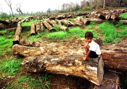 Kahlschlag (in Kambodscha): Umweltschützer beschuldigen politische Führung des Landes