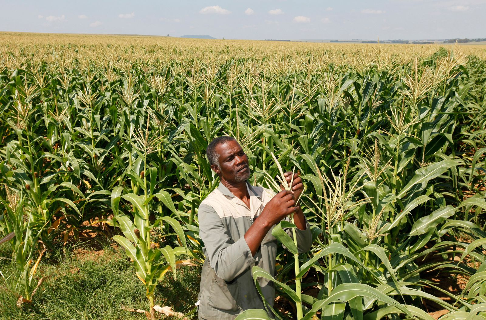 Afrika / Bauern / EU-Export / Farm