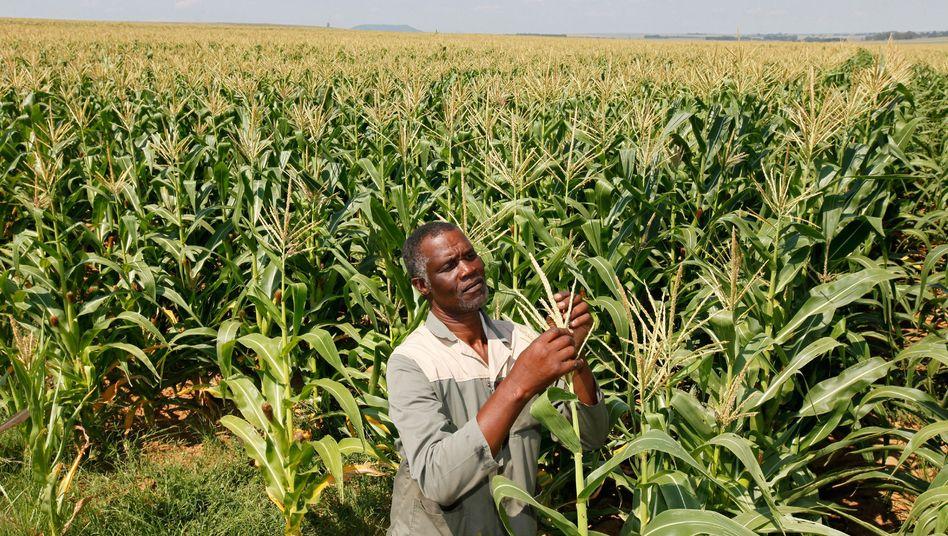 Bauer in Südafrika: In drei Jahren Exporte um 625 Prozent gesteigert