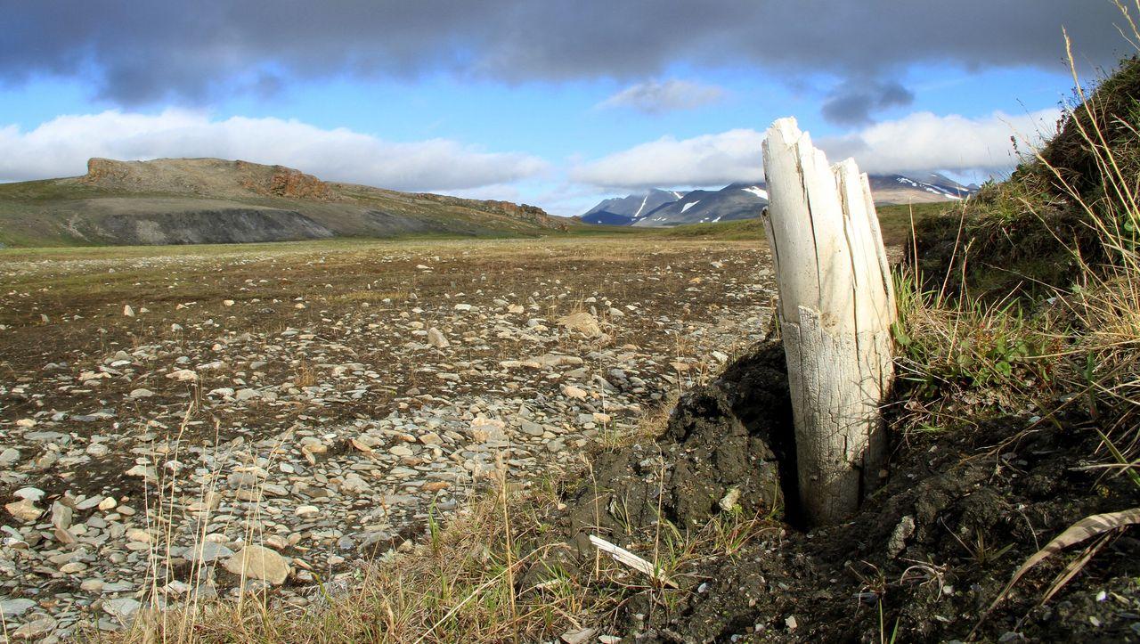 In Mammut-Überresten: Forscher finden Millionen Jahre alte DNA-Spuren - DER SPIEGEL