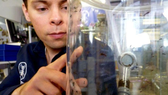 Von Beruf Ameisenhändler: Martin and the Ants