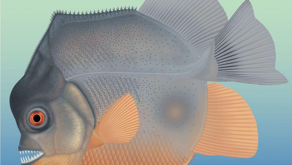 Künstlerische Darstellung des Fisch-Fossils